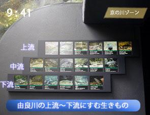 由良川に住む生きものたちの紹介