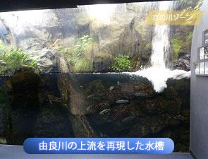 由良川の上流を再現した水槽