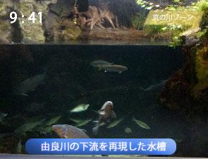 由良川の下流を再現した水槽