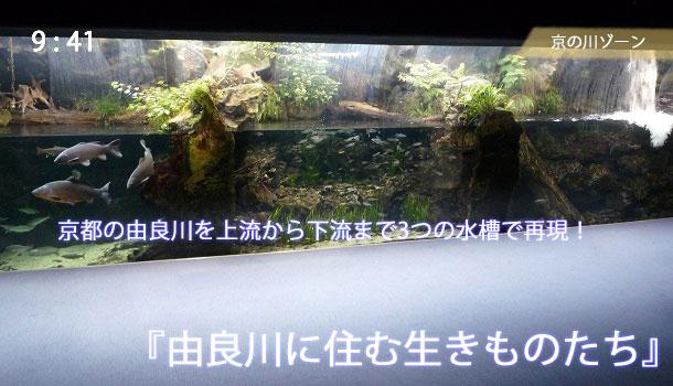 由良川を再現した3つの水槽