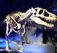 恐竜の展示