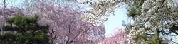 京都水族館のデートコース