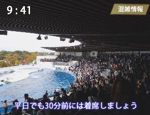 京都水族館のイルカLiveの混雑