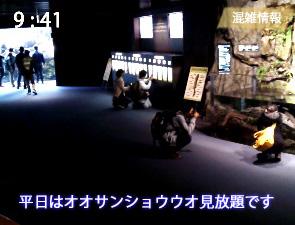 京都水族館の京の川ゾーンの混雑