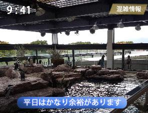 京都水族館のペンギンゾーンの混雑