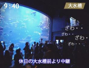 京都水族館の大水槽の混雑