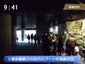 京都水族館の連休の京の川ゾーン