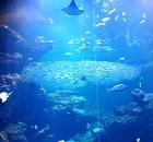 京都水族館の大水槽