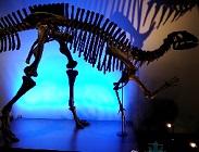 福井県立恐竜博物館のパスポート提示による割引